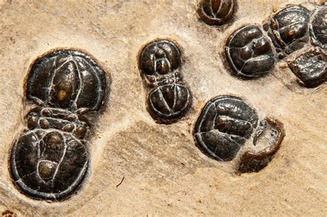 Cambrian Explosion of Life on Earth 'Caused by a Cascade