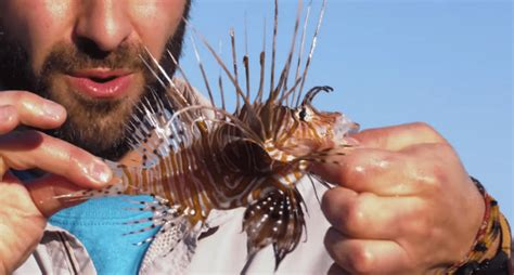 What Can You Do to Stop a Lionfish Sting From Hurting?