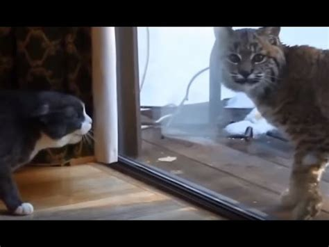 Cats gets scared by Wild Animals Compilation