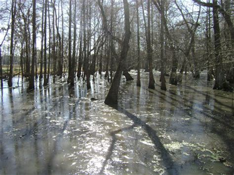 Louisiana Swamp Tours: Welcome To The Frozen Swamp