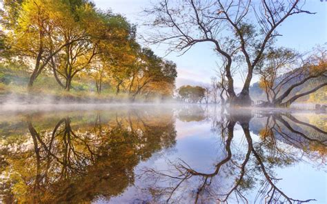 Autumn Morning Lake Evaporation Trees Willow Reflection In